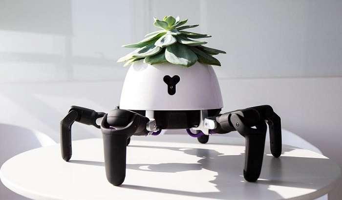 Робот Hexa: митти боғбон қисқичбақами ёки ўргимчак?