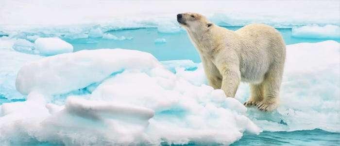 Олимлар ҳавотирда: Арктика исиб бормоқда: