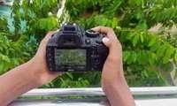 Mikrofotografiya konkursi: g'oliblar aniqlandi