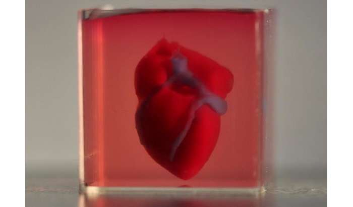 Илмда инқилоб: Исроилликлар 3D-принтерда одам тўқимасидан жонли юрак чоп этишди! (+видео)