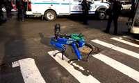 Қуролли босқинчилик тўғрисидаги чақирувга полиция робот-ит билан келди (видео)